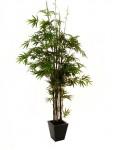 Bambus černý kmen 240 cm