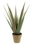 Aloe-Vera rostlina 60 cm
