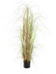 Trs okrasné trávy v květináči 150cm