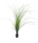 Reed grass 145 cm