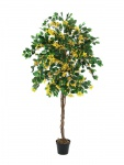 Bougainvillea žlutá 150cm