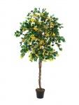 Bougainvillea žlutá 180cm
