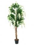 Vistárie strom bílá 150cm