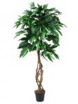 Mango stromek 150cm