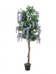 Vistárie strom fialová 150 cm