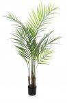 Areca palma s velkými listy 125cm