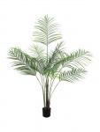Areca palma s velkými listy 185cm