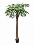 Phoenix palma Luxor 210cm