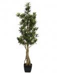 Nohoplod stromek, 115 cm