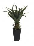 Agave rostlina s květináčem 75 cm
