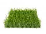 Umělá tráva, světle zelená, 25 x 25 cm