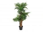 Areca palma, 140 cm
