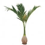 Europalms palma Phoenix, umělá rostlina, 240cm