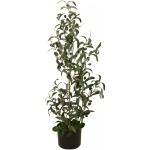 Olivovník s plody 90 cm
