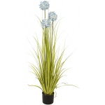 Allium tráva s modrými květy 120 cm