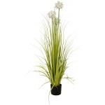 Allium tráva s bílými květy 120 cm