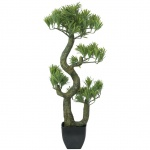 Bonsai borovice 70 cm