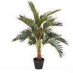 Kokosová palma 90 cm