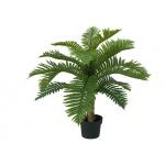 Cycas palma 70 cm