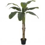 Banánovník 145 cm