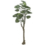 Pothos stromek 150cm