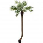 Phoenix palma zakřivená 240cm