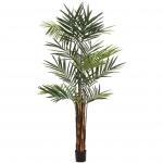 Kentia palma 300cm