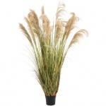 Čínská stříbrná tráva 180 cm