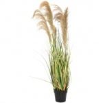 Čínská stříbrná tráva 140 cm
