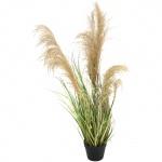 Čínská stříbrná tráva 110 cm