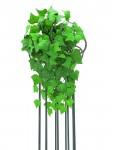 Břečťan keř hustý 180 listů 60 cm