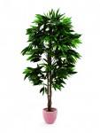 Mango strom 180 cm
