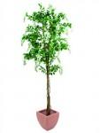 Vistárie strom bílá 180 cm