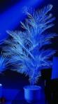 UV Kentia 170 cm