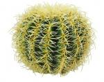 Zlatá koule kaktus 27 cm